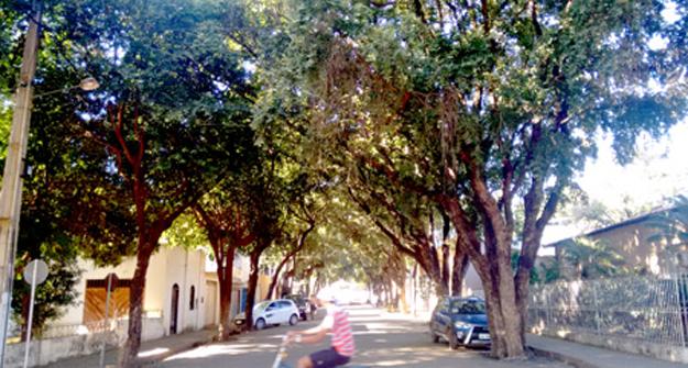 Arborização na Travessa da Rua 19 de Maio