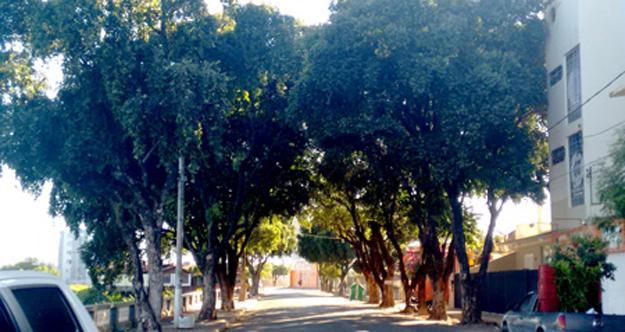 Arborização na Av. Presidente Vargas