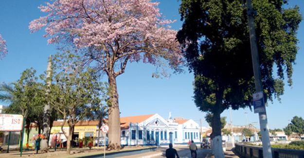 No fundo da Barriguda florida o antigo prédio da Sertaneja restaurado