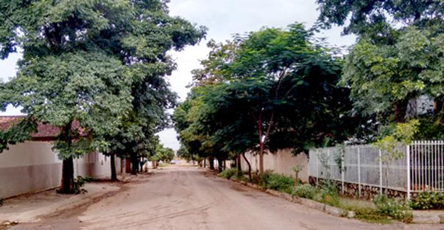 Durval também cultiva árvores nas ruas entorno de sua residência